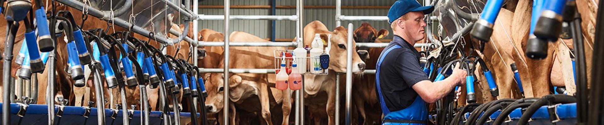 SAC Nederland cover foto